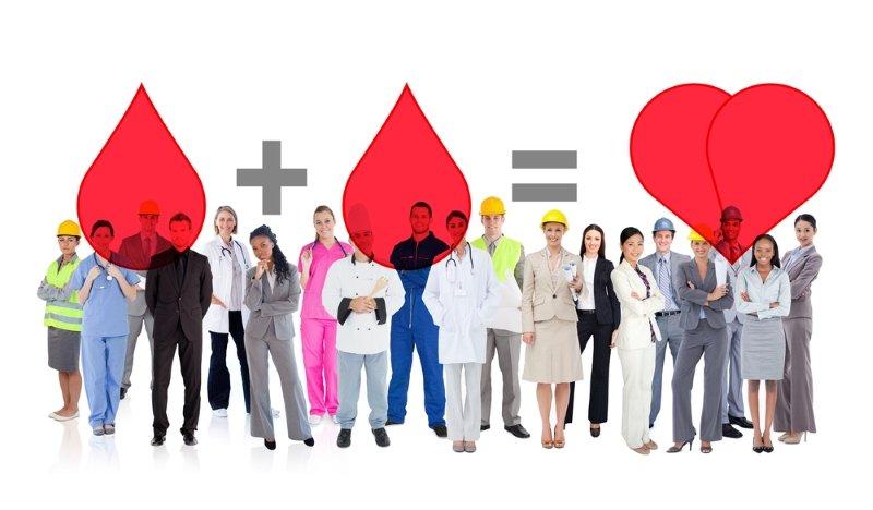 функции крови в организме