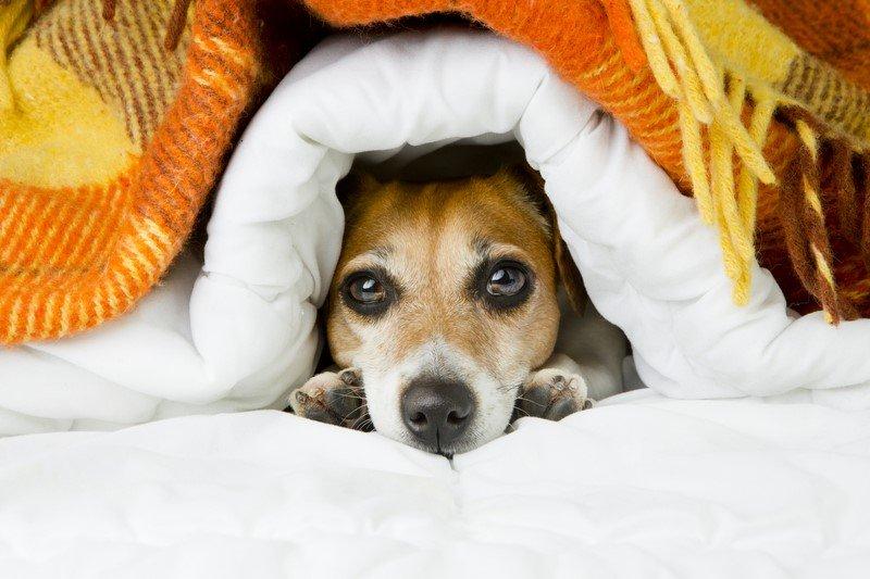 7 неожиданных причин, чтобы взять собаку к себе в кровать! И так каждую ночь…