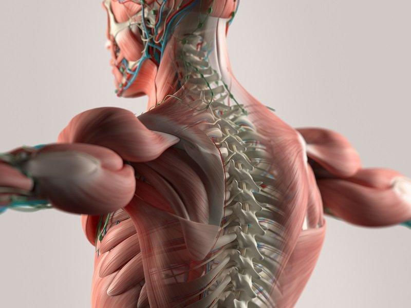 спина лечение