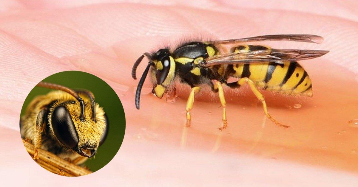 Апитерапия лечение укусами пчел продуктами пчеловодства