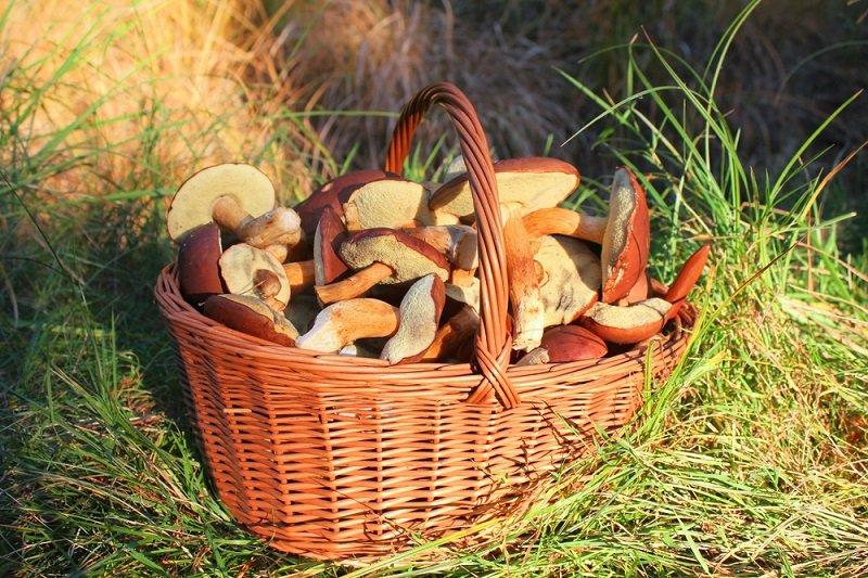приготовление грибов