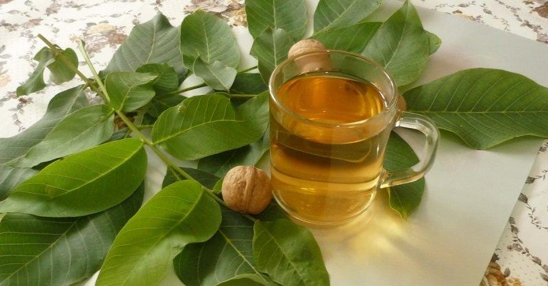 Картинки по запросу настойка с листьев грецкого ореха