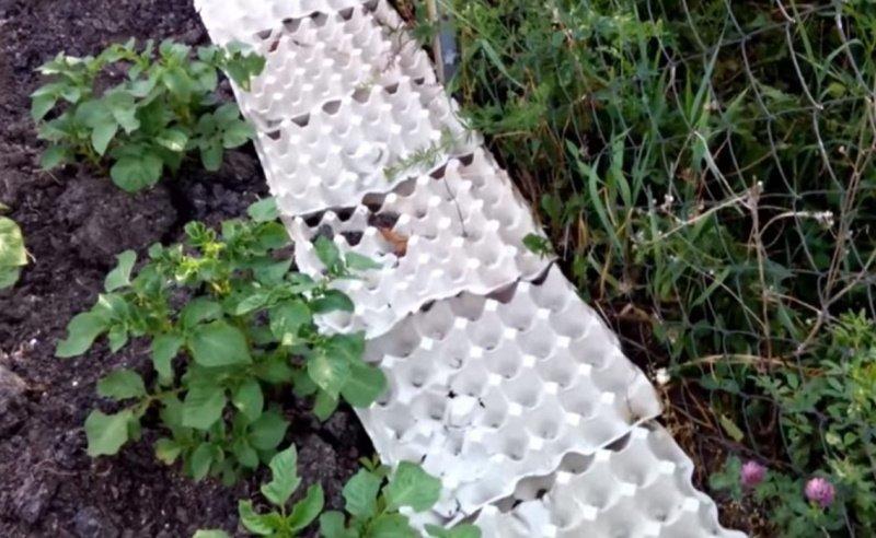 лоток для яиц применение