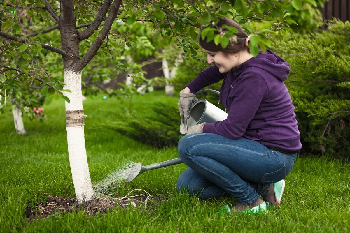 Муравьи достают, делаю для них ловчий пояс, безопасный для деревьев Советы,Вредители,Дача,Деревья,Клей,Сад,Скотч