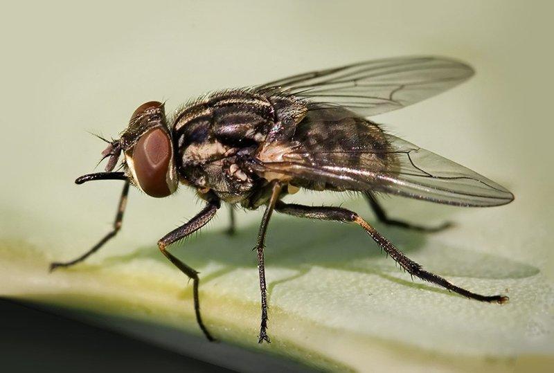 ловушки для насекомых своими руками
