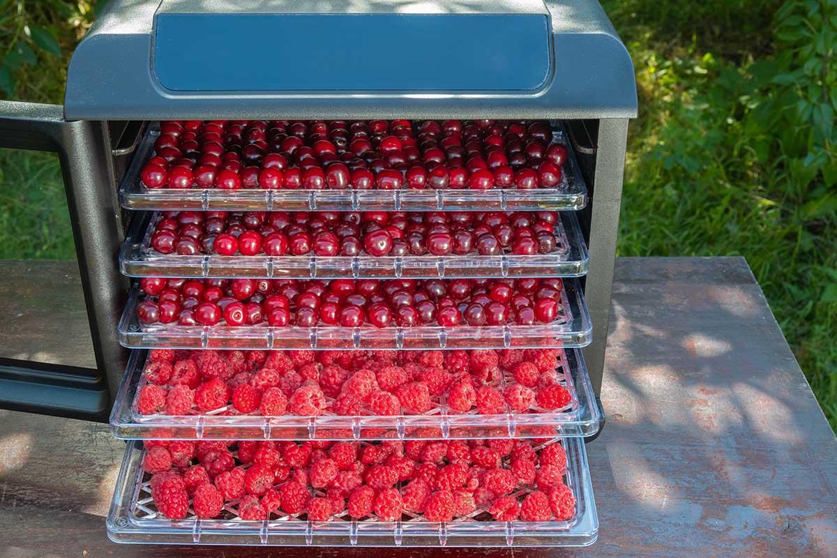 Сушилка для овощей и фруктов не остывает всё лето Видео,Кулинария,Советы,Готовка,Дегидратор,Овощи,Прибор,Сушилка,Техника,Фрукты,Ягоды