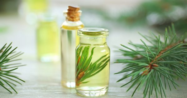 Bottles of pine essential oil on wooden table