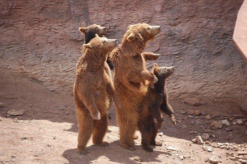 Спину и поясницу сразу отпускает, стоит мне заняться «медвежьей ходьбой»