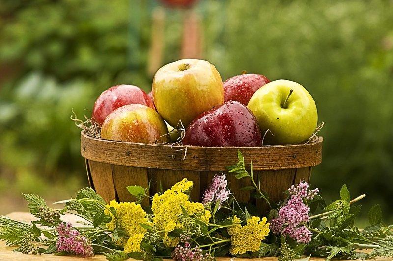 лечебные свойства яблока