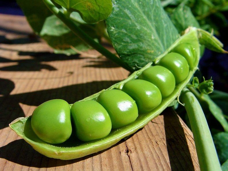 молодой зеленый горошек в стручках