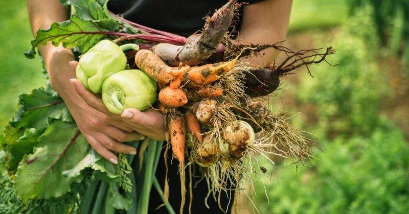 вред овощной диеты