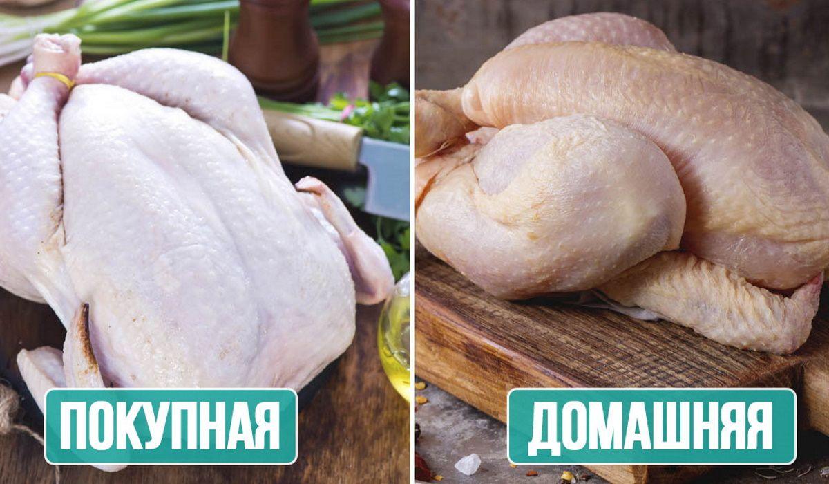 Чем бульон из покупной курицы отличается от бульона из домашней курочки