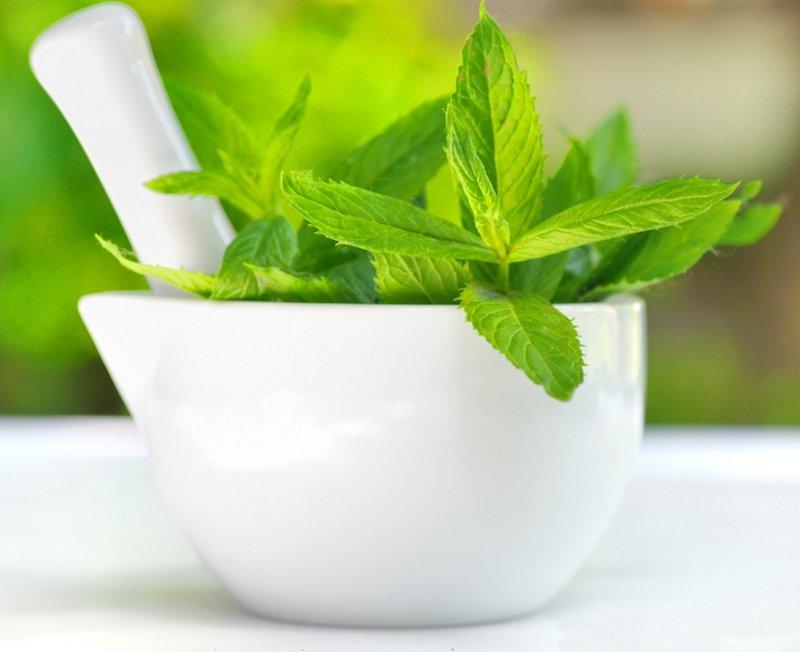 мятный чай свойства