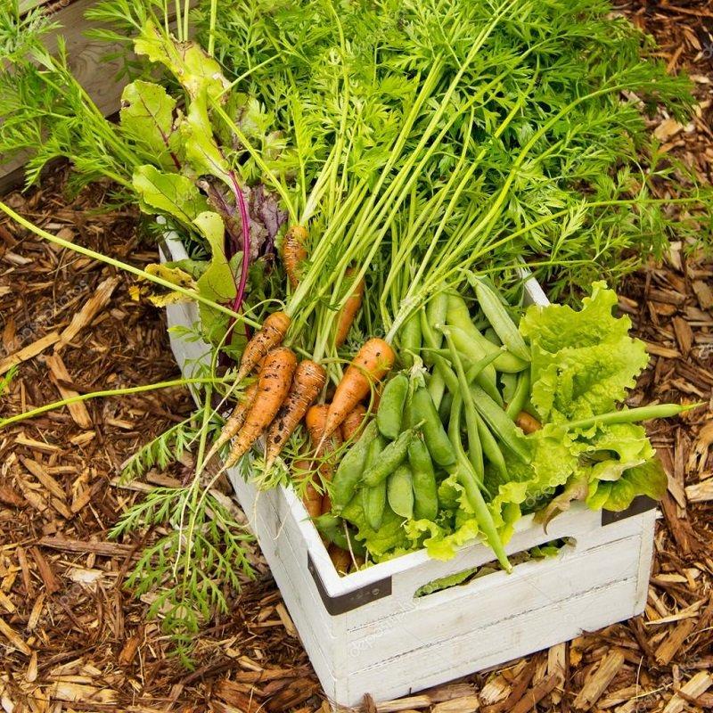 вредители сада и огорода