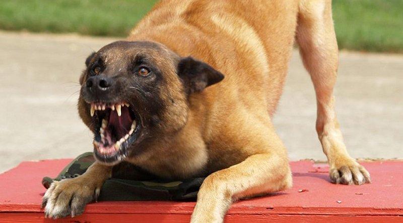 ak psy napadli