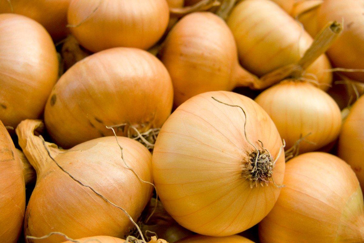 Настой луковой шелухи и его польза для твоего огорода