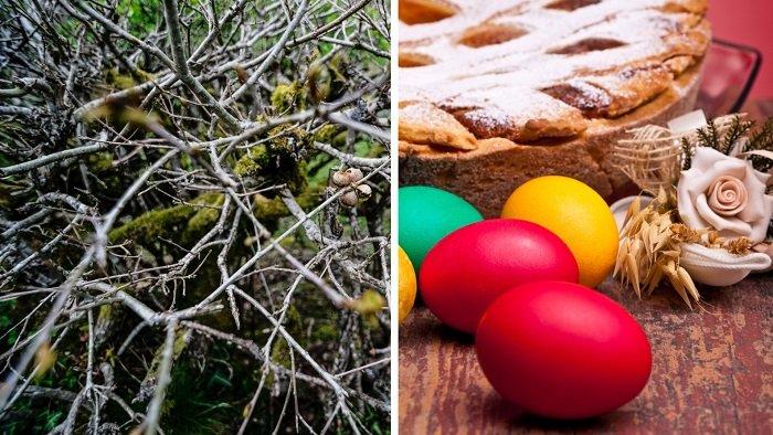 Картинки по запросу Делаем натуральные красители для пасхальных яиц!