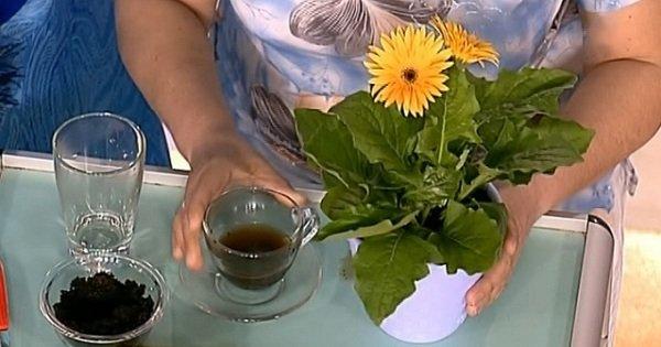 5 натуральных удобрений для домашних цветов. Пускай цветут и радуют глаз!