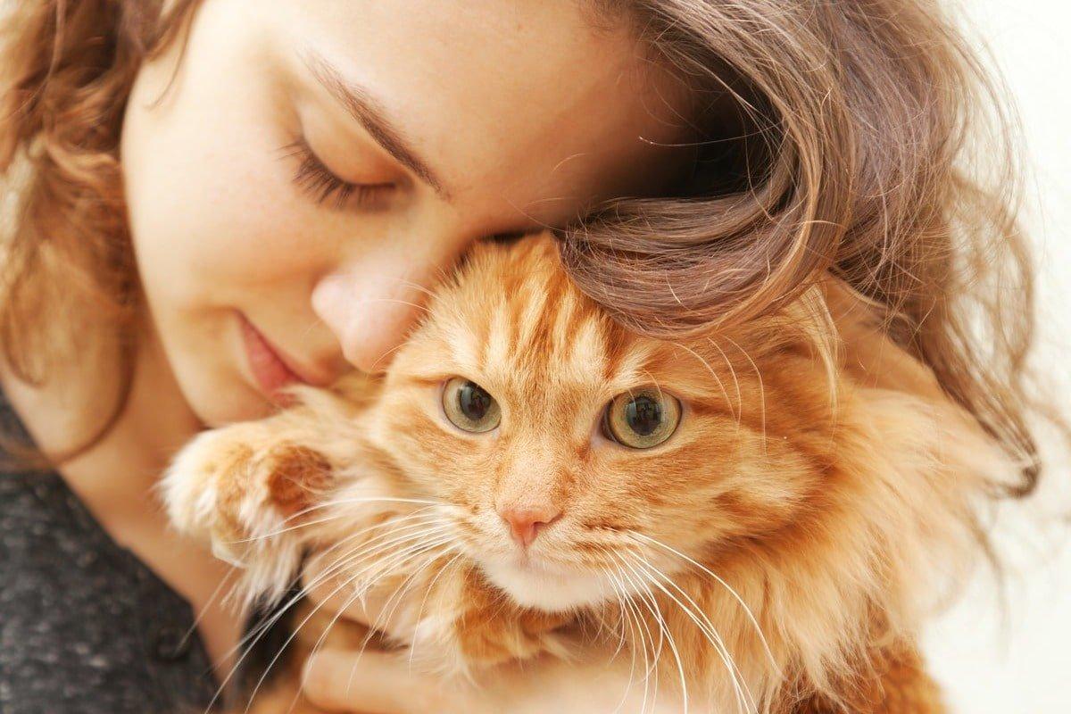 В аэропорту был найдет рыжий кот, хозяйка улетела одна, а переноску забрала с собой