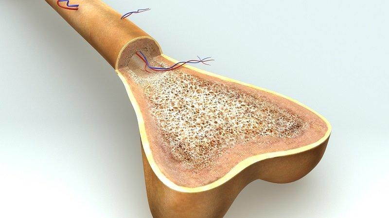 кости человека анатомия