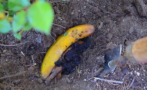 банан как удобрение