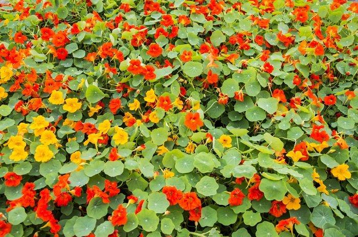 неприхотливые цветы и кустарники