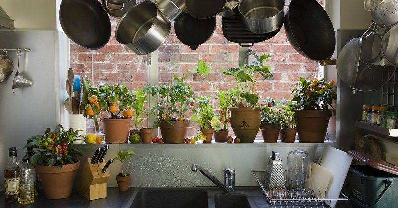 Озеленение кухни: 5 неприхотливых растений на радость всем хозяюшкам