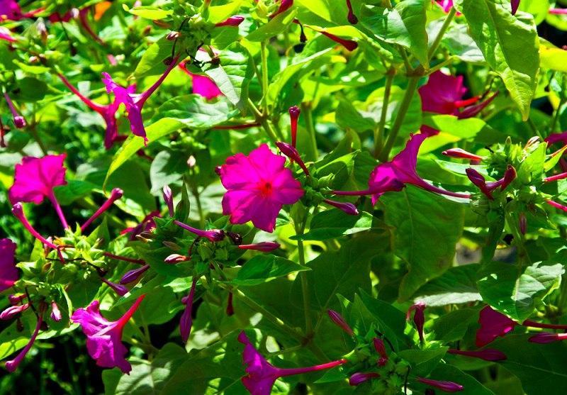 яркий цветок фото