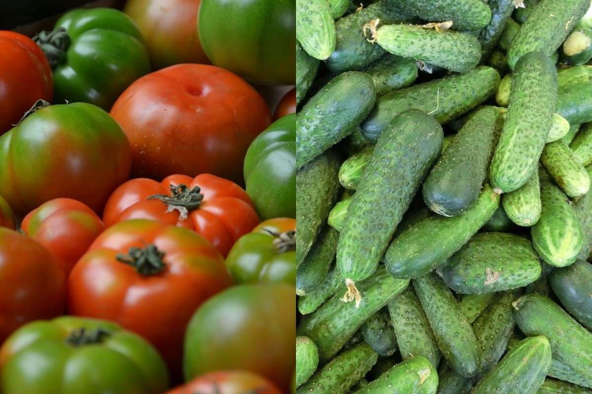 Чем полить грядки осенью, чтобы защитить огурцы и помидоры от вредителей и хворей на год вперед Советы,Вредители,Огород,Осень,Профилактика,Сидераты,Удобрения