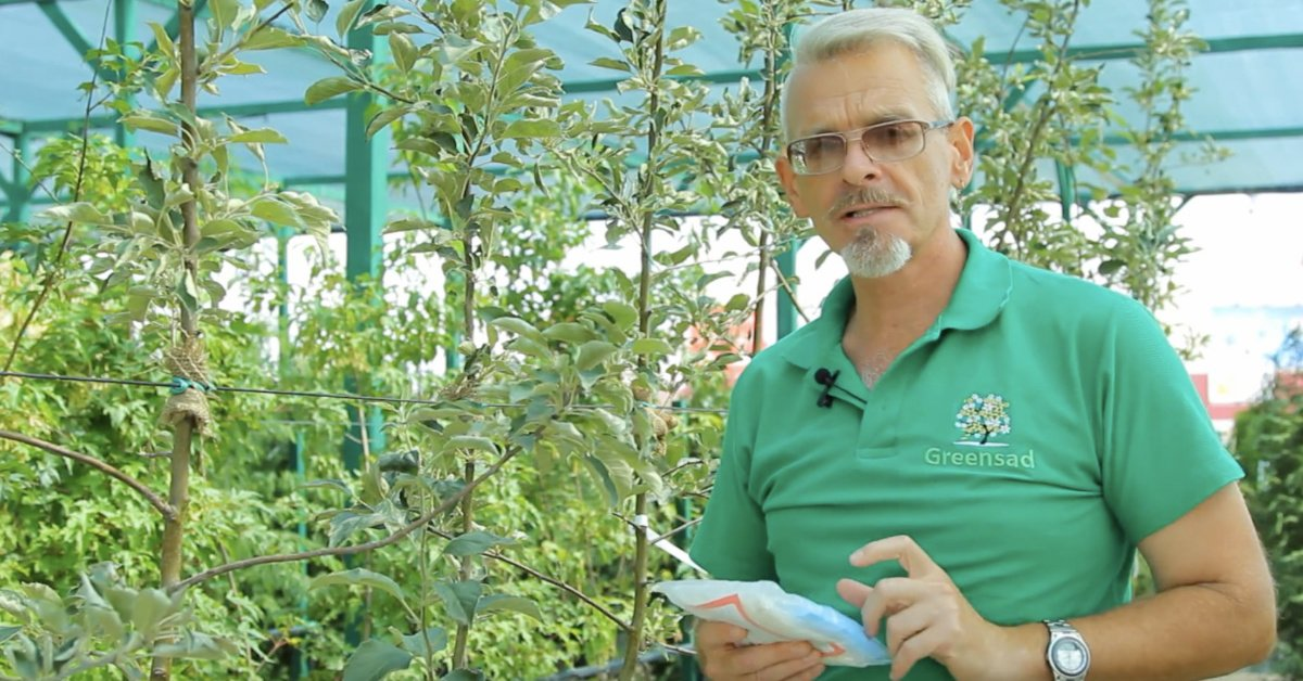 Обработка яблонь от болезней советы специалистов