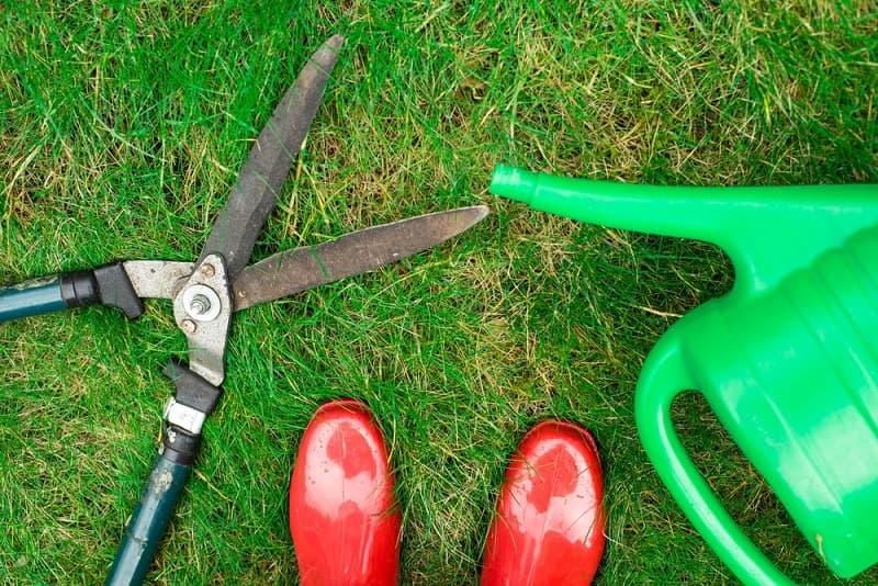 Какие кустарники не стоит обрезать весной
