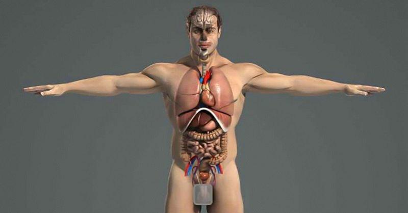 очищение организма человека от паразитов