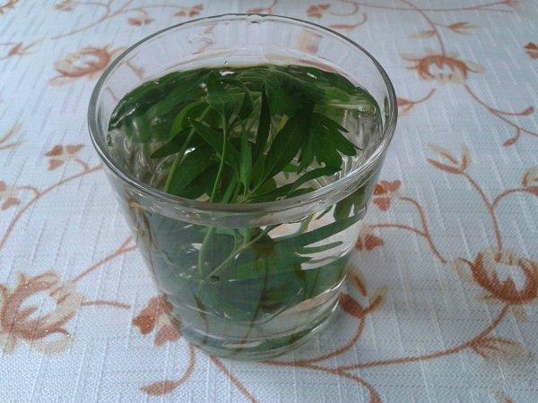 напиток из петрушки для очищения почек