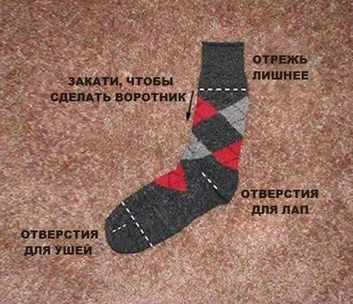 одежда для собаки из носка