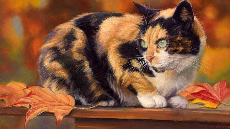 магические свойства кошки
