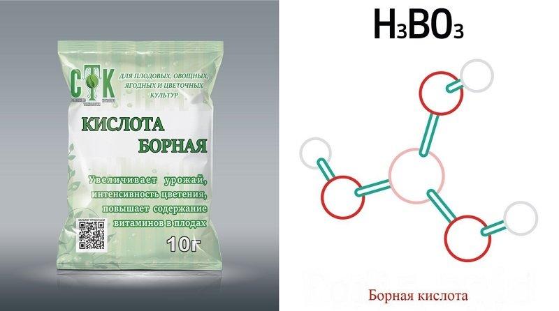 Новости - Рецепт щедрого урожая: добавляю половину чайной ложки на ведро воды как опрыскивать растения борной кислотой