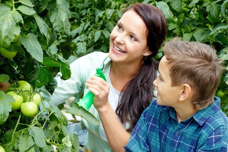 Новости - Рецепт щедрого урожая: добавляю половину чайной ложки на ведро воды для чего опрыскивают растения борной кислотой