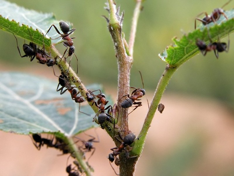 Новости - Рецепт щедрого урожая: добавляю половину чайной ложки на ведро воды борная кислота для растений как развести