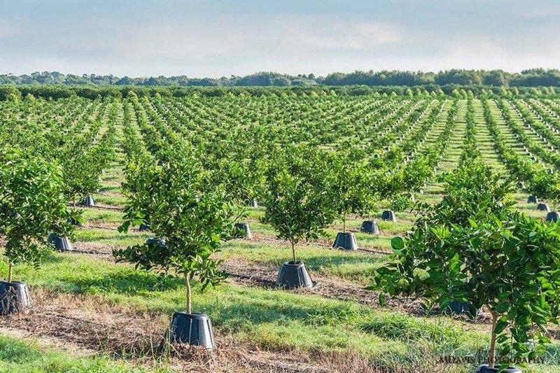 мировое органическое земледелие xxi века