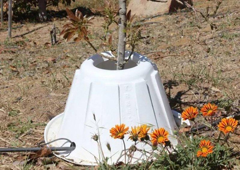 контейнеры для растений в саду