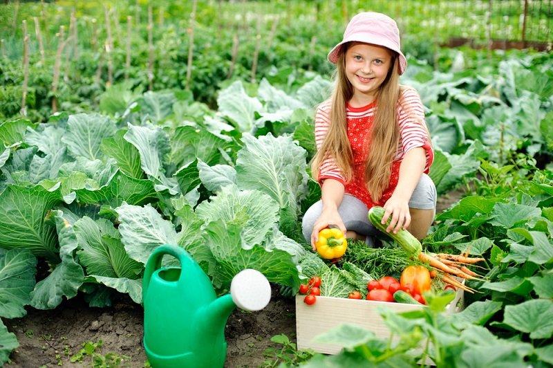 чем обрабатывать капусту