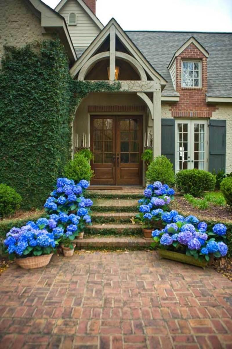 растения перед домом