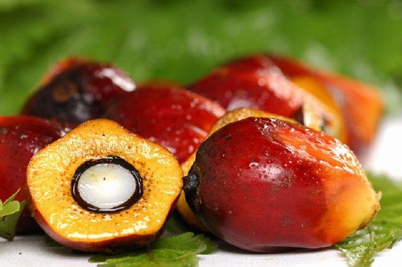 вред пальмового масла в продуктах