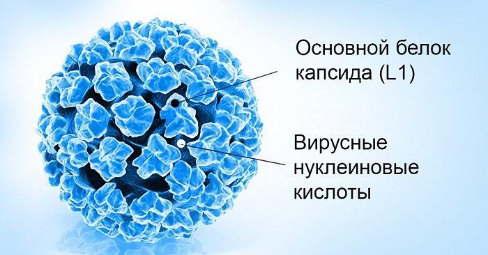 папилломавирус виды