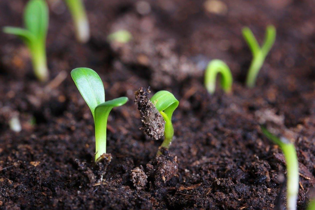 Удобрения для огорода без финансовых вложений