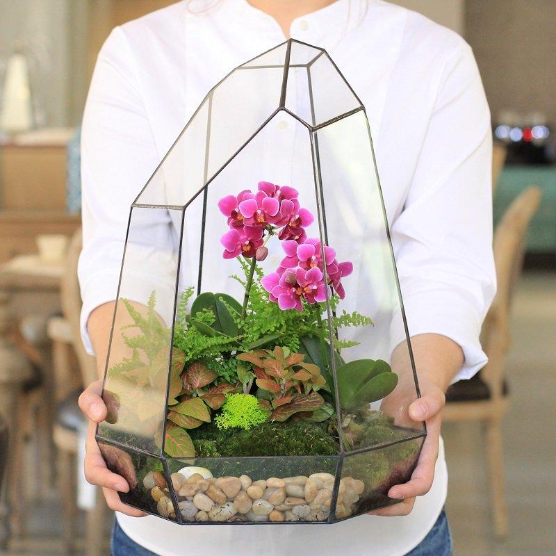 Neparastā orhideju pārstādīšana