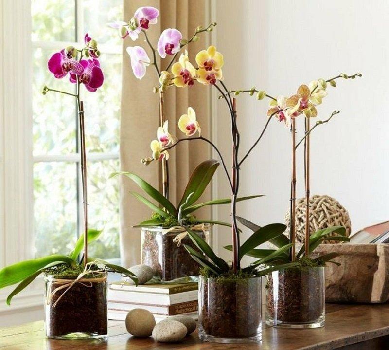 Как правильно сажать орхидею в горшок 97