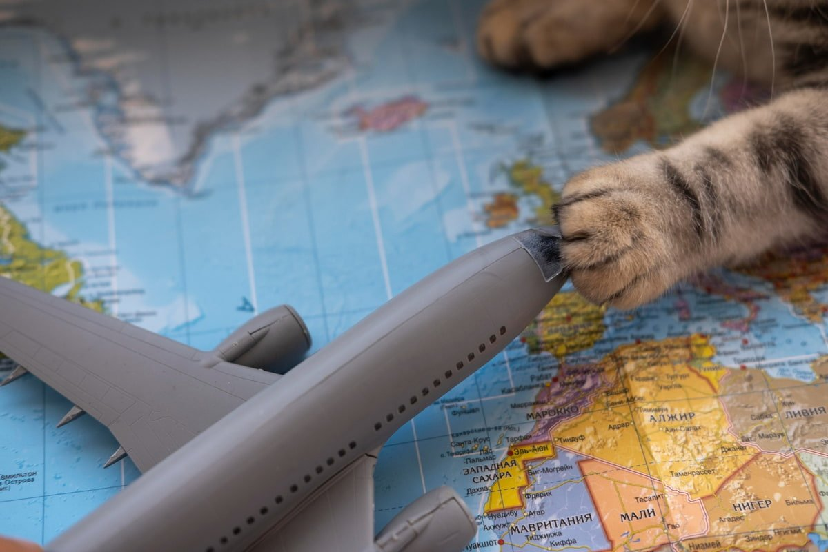 перевозка животных в самолете