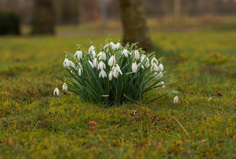 первые цветы весны в лесу