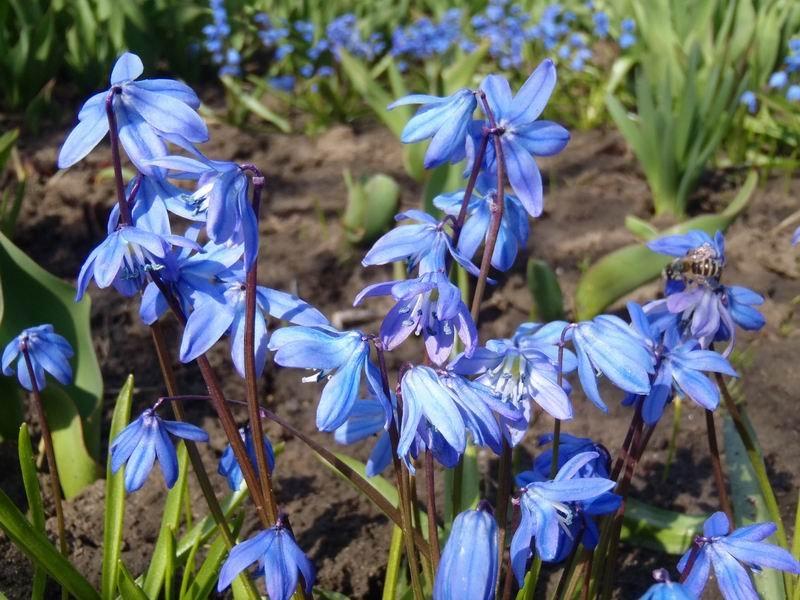 первые цветы весны фото